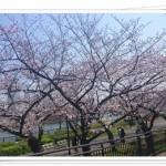 大阪で飲食ができるお花見スポットは?狙い目の穴場はここだ!