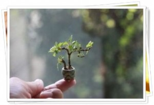 指の上の盆栽