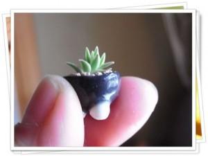 指の間の盆栽
