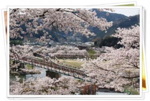 JR笠置の桜