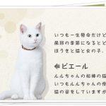 ルル(風邪薬)CMの白猫の種類や名前は?ストーリーに他の出演も!