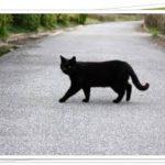 黒猫に横切られない方法をあみ出した!ジンクスって信じる?