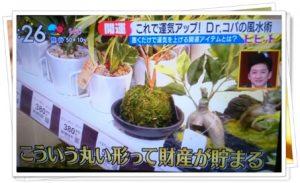 丸い形の植物