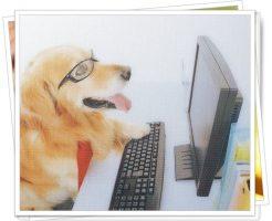 PCを見る犬